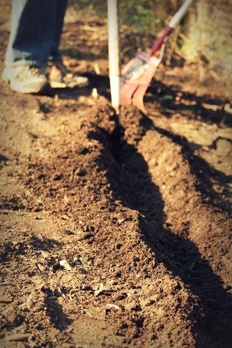 Weekend planting 2