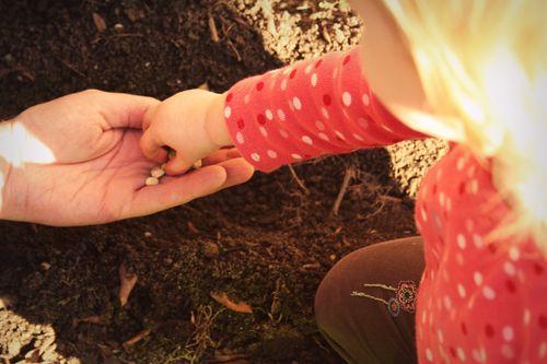 Weekend planting 3