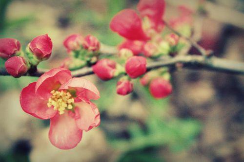 Pink bloom opening
