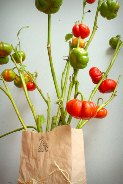Pumpkin peppers 1