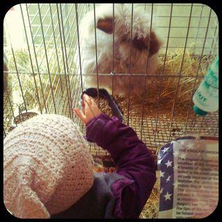 Fair bunny