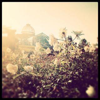 Lgbg rose garden