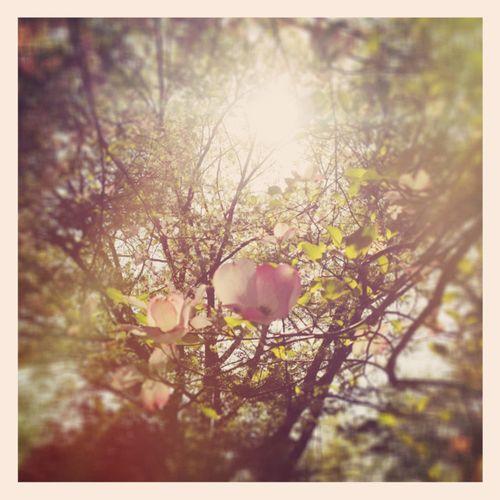 Sunlight blooms